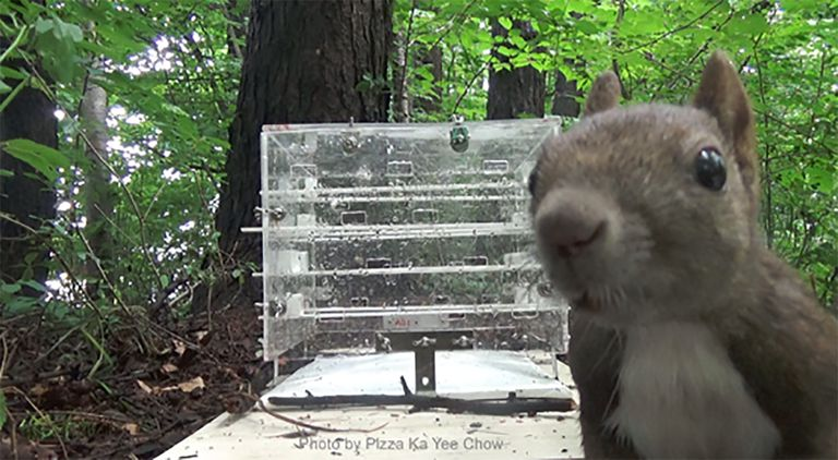 A Eurasian red squirrel and the puzzle box in Tsuda Park at Obihiro, Japan