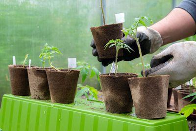 Seedlings in garden pots