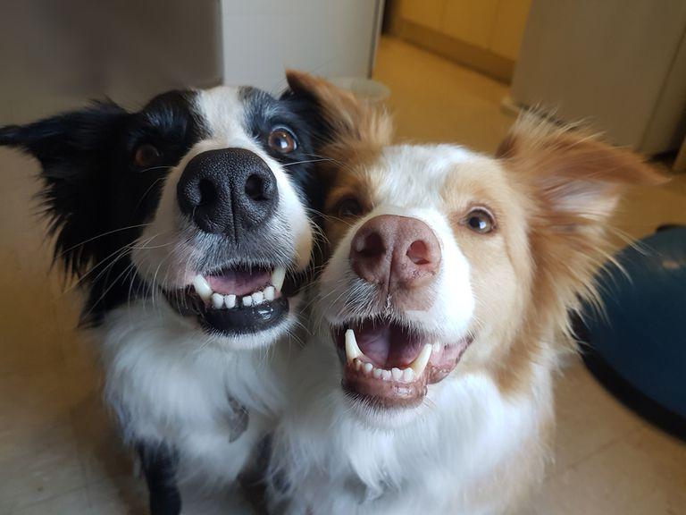 ¿Te atraen los perros machos o hembras?