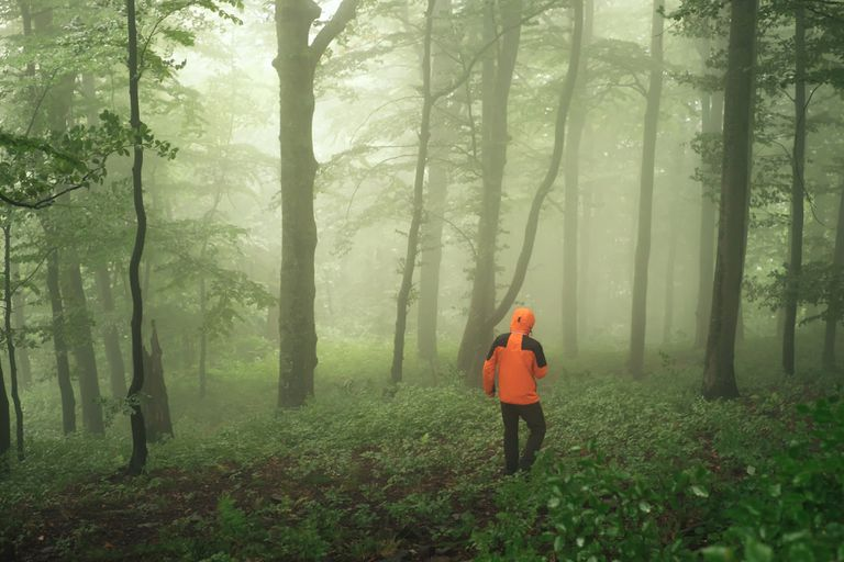 person walking through a foggy forest