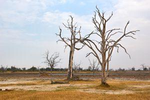 Dead Tree Island