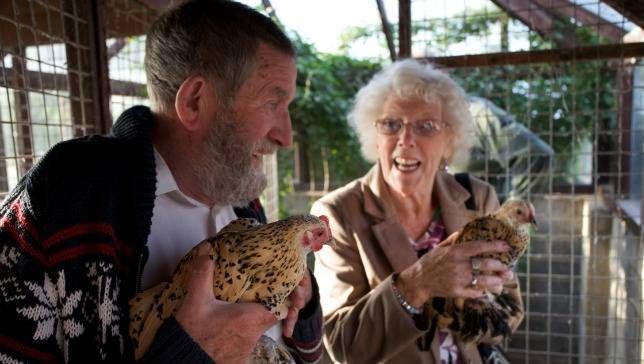 Por qué los pollos y las personas mayores son una pareja hecha en el cielo