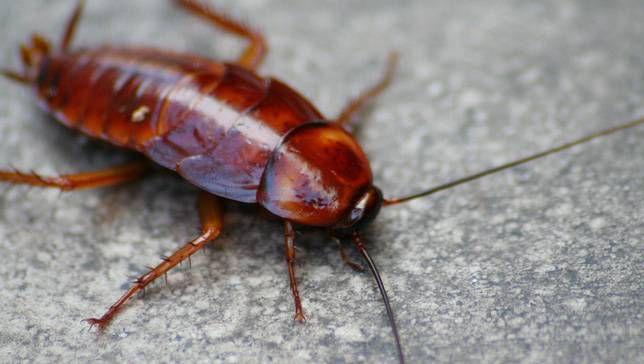 Las cucarachas tienen personalidades distintas