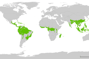 Tropical wet forests