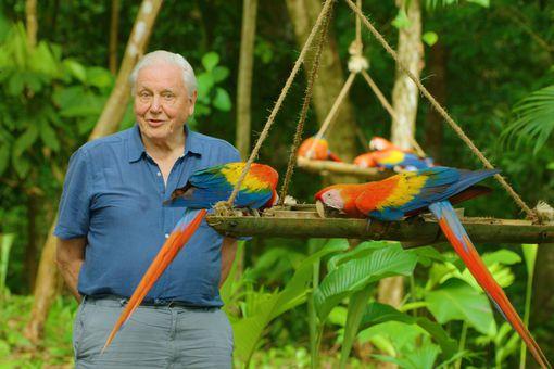 David Attenborough in Costa Rica