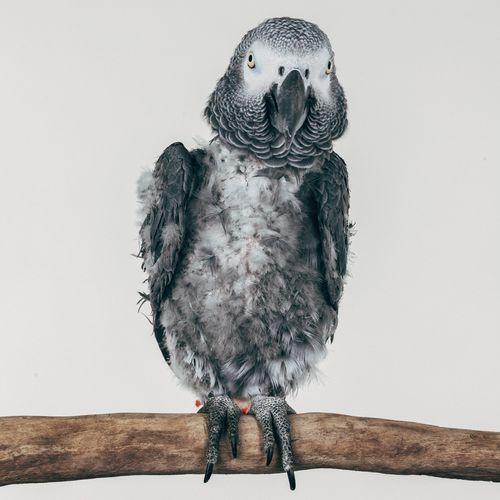 Exotic birds: Bubba