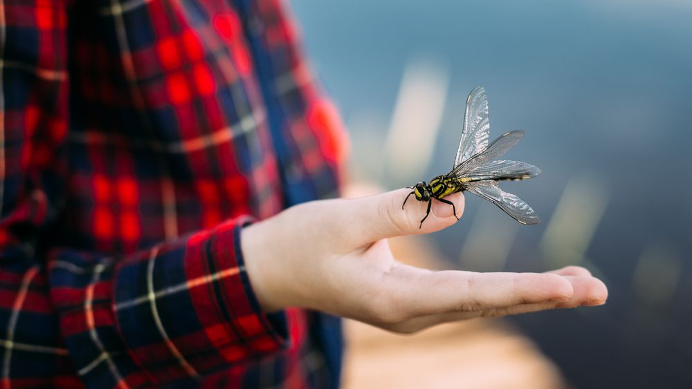 Dragonfly sanctuaries are both a beautiful place to visit, and a necessary refuge for these species.
