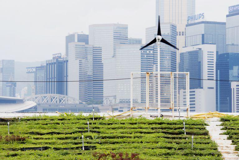 Renewable Energy Green Urban Farming in Hong Kong China