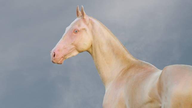 10 Strange and Beautiful Horse Breeds