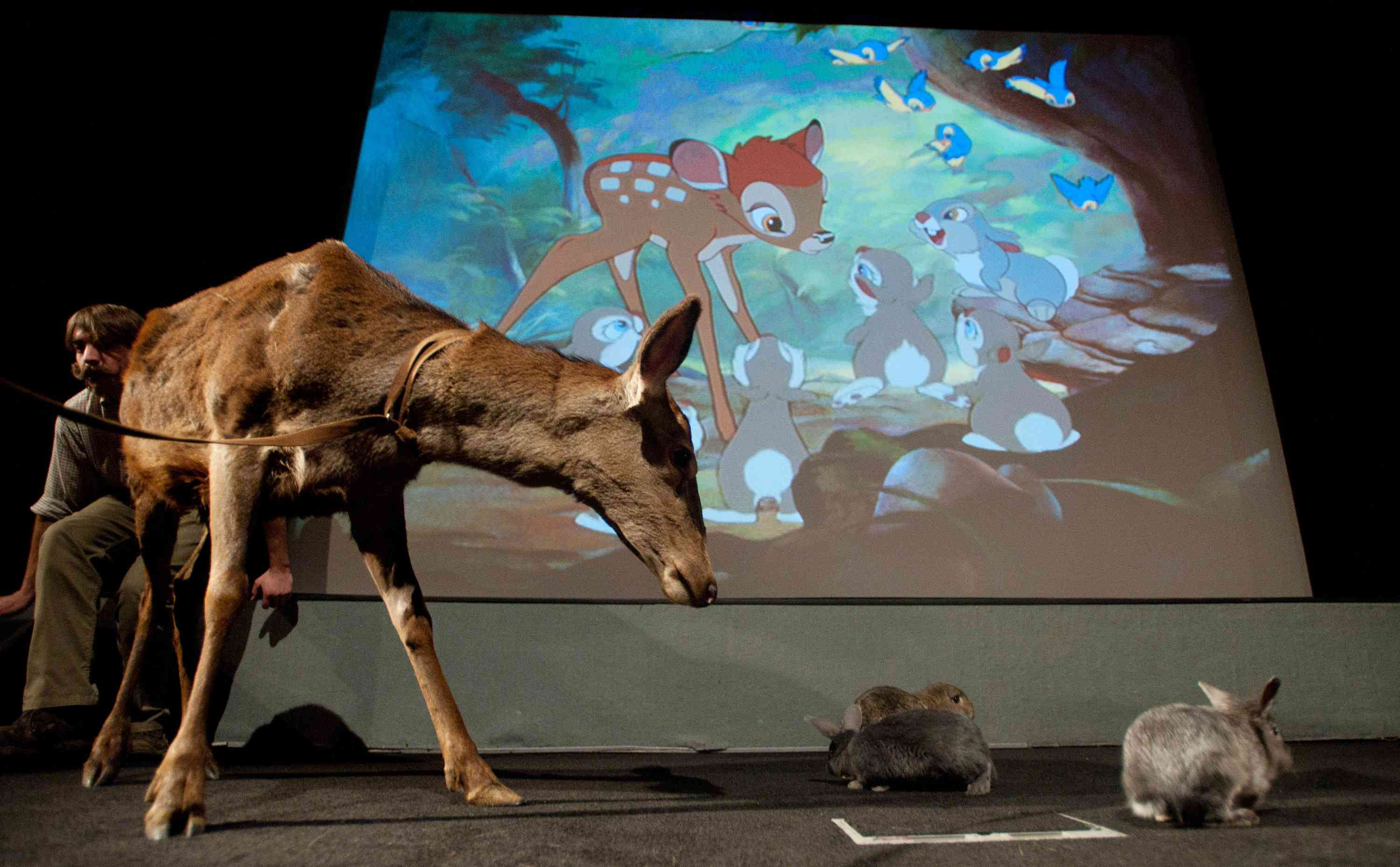 A deer and rabbits in front of a projection of the movie Bambie