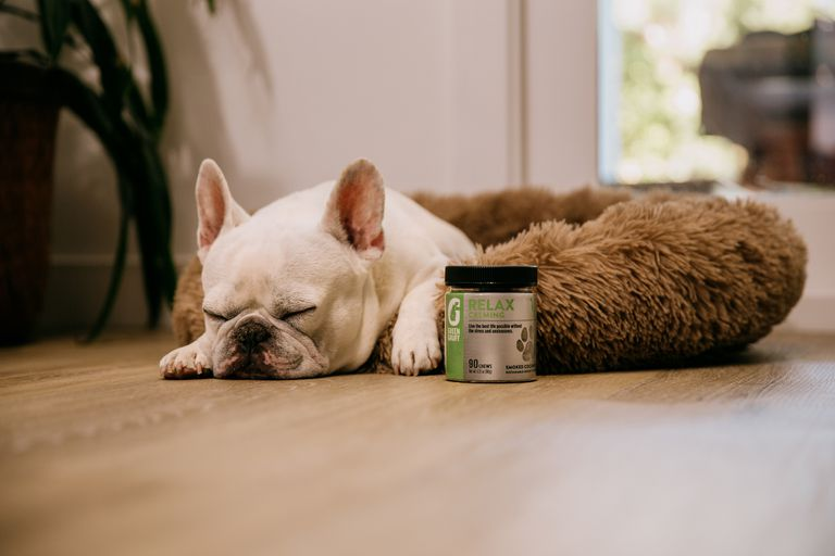 dog relaxing with green gruff