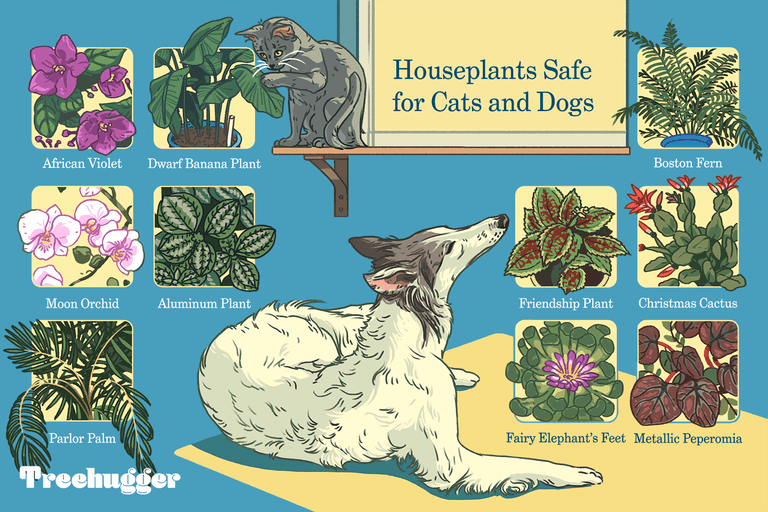 colorful illustration of houseplants safe for cats and dogs