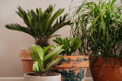 Four houseplants in ceramic pots