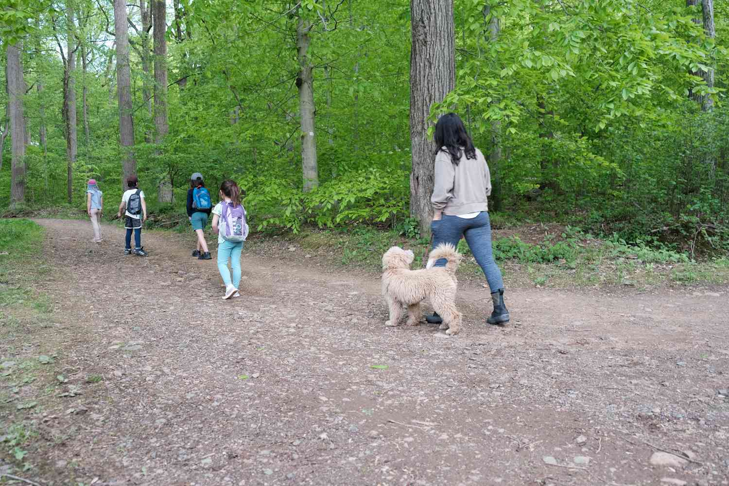 group of kids and dog owner, with doodle, walk on dirt path into forest