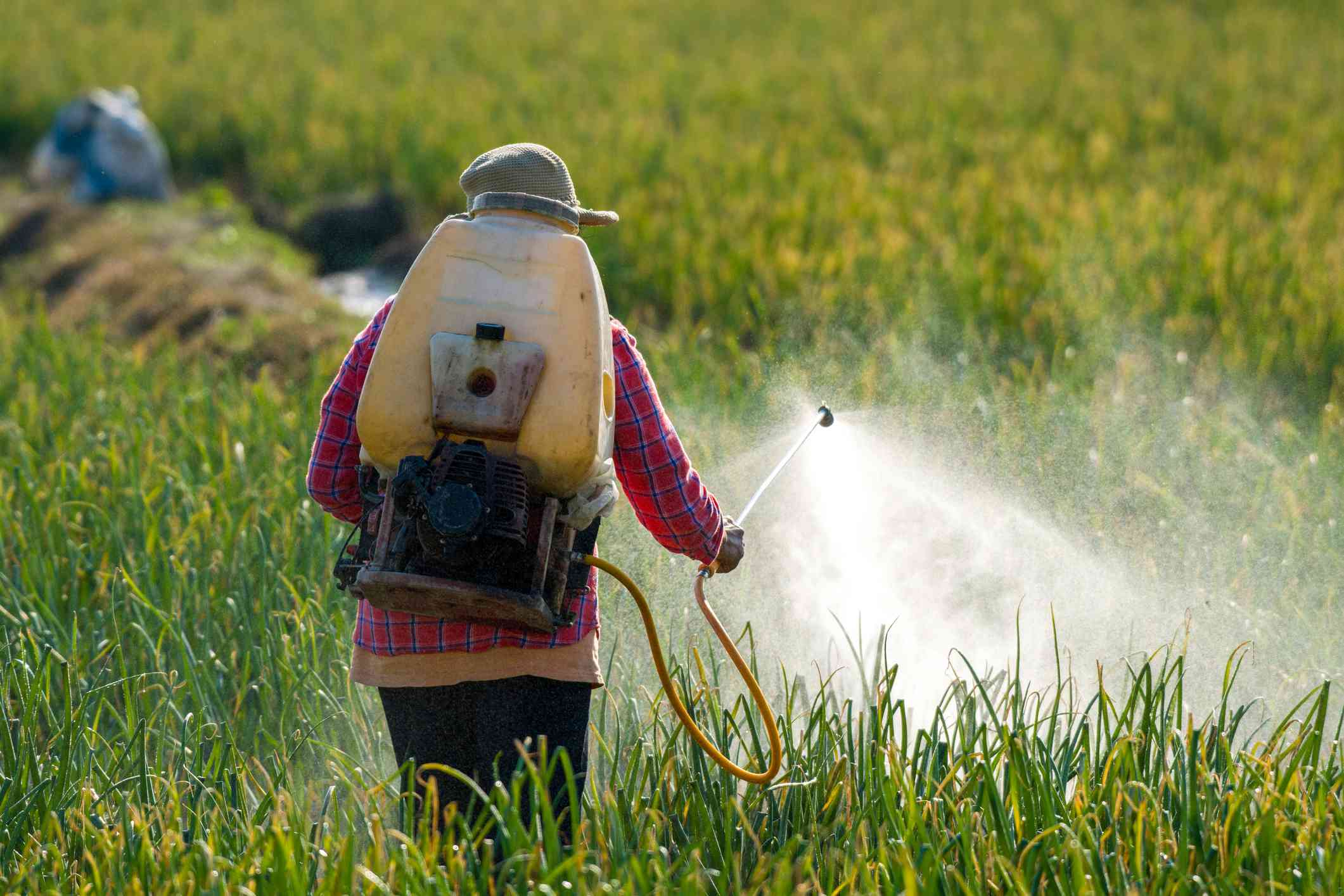 Farmer spraying pesticide.