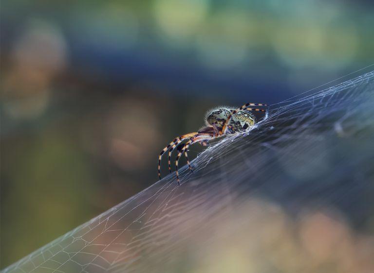 spider on her web in a garden