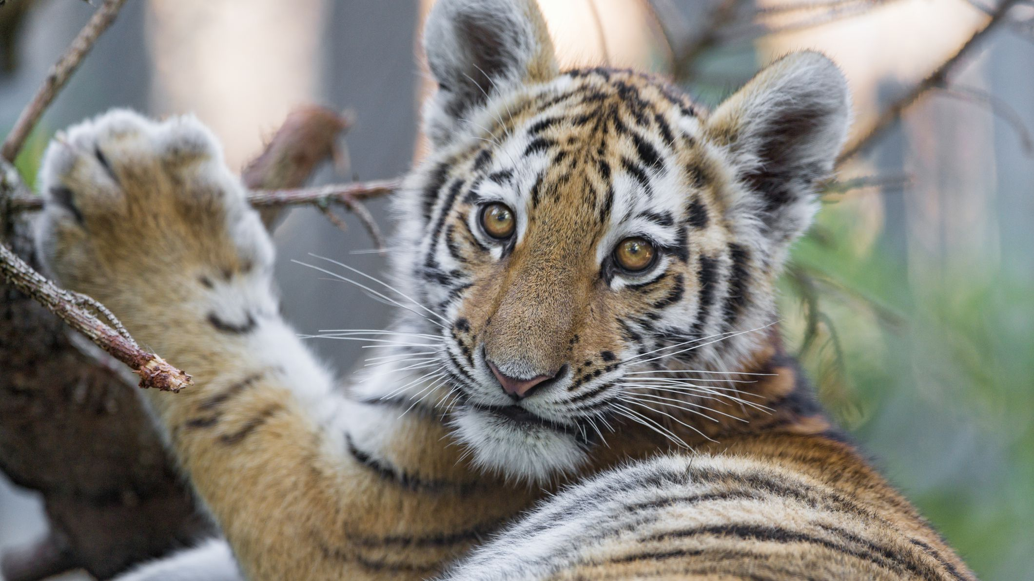 10 Of The Cutest Endangered Species