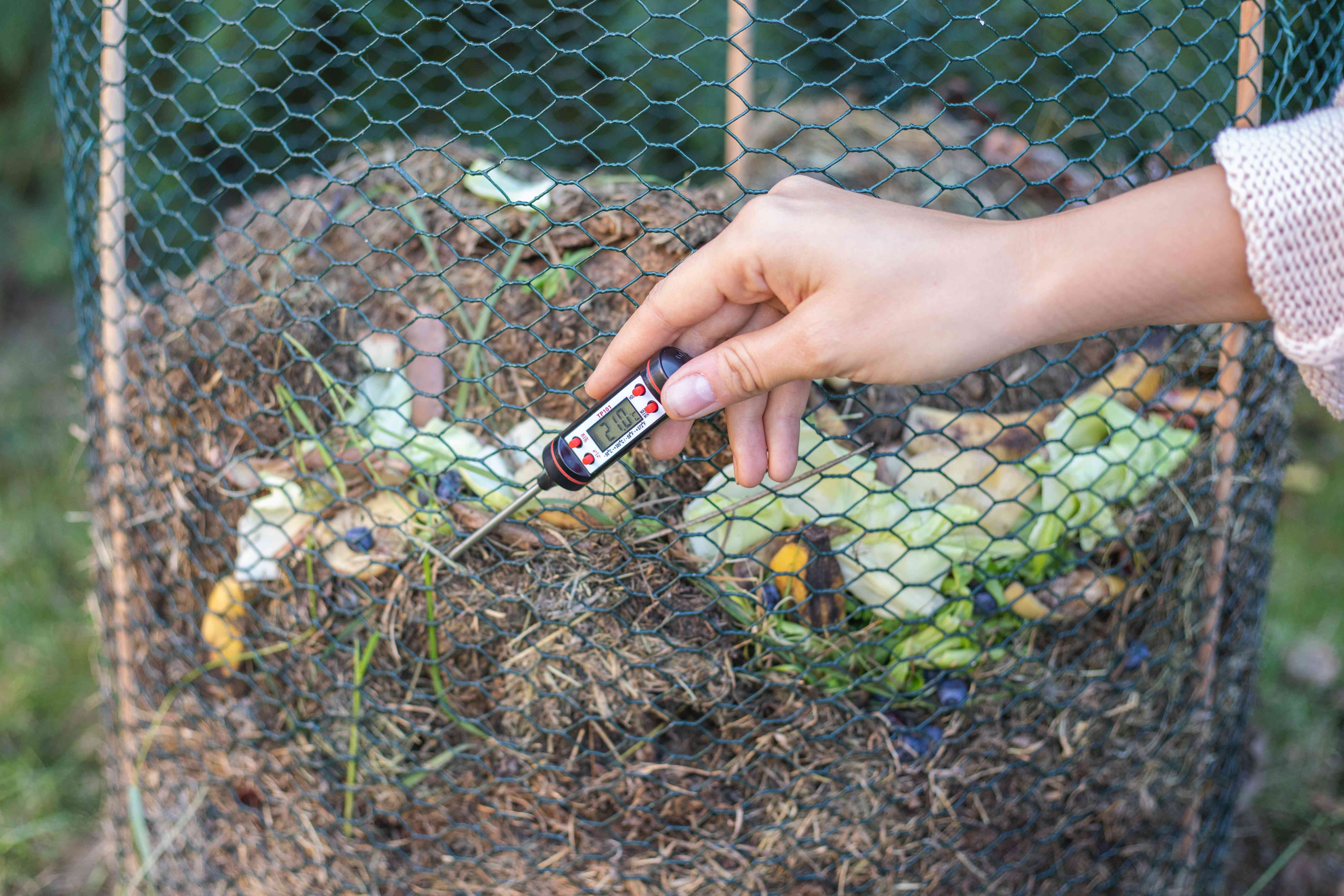 woman takes temperature of hot compost outside with electronic thermometer