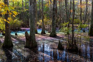 Rainbow Swamps Have Candy-Colored Hues