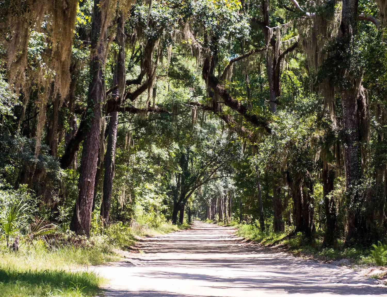 A tree-lined path on Daufuskie Island, South Carolina
