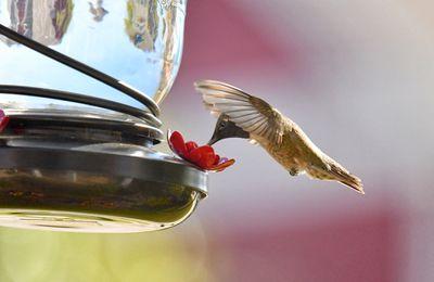 Hummingbird at a feeder
