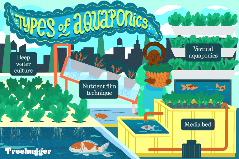 types of aquaponics include deep water culture, media bed, nutrient film technique, and vertical