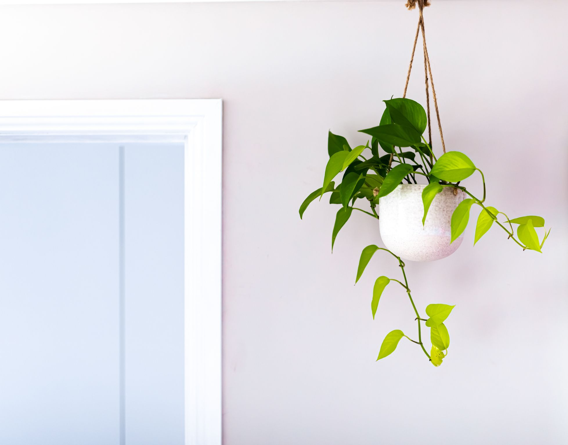 A trailing ivy plant in a white pot suspended from the ceiling