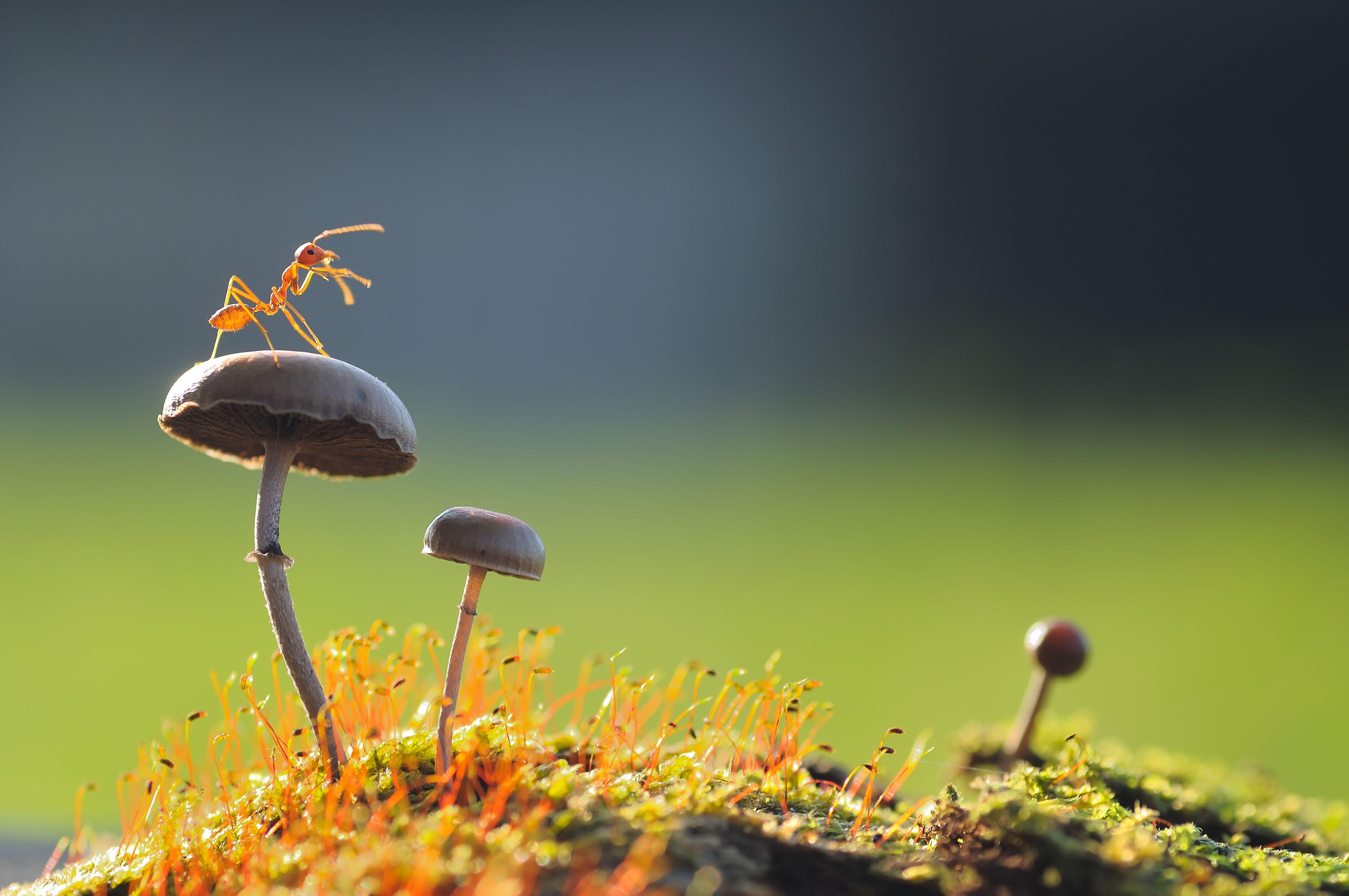 13 Amazing Antics of Ants