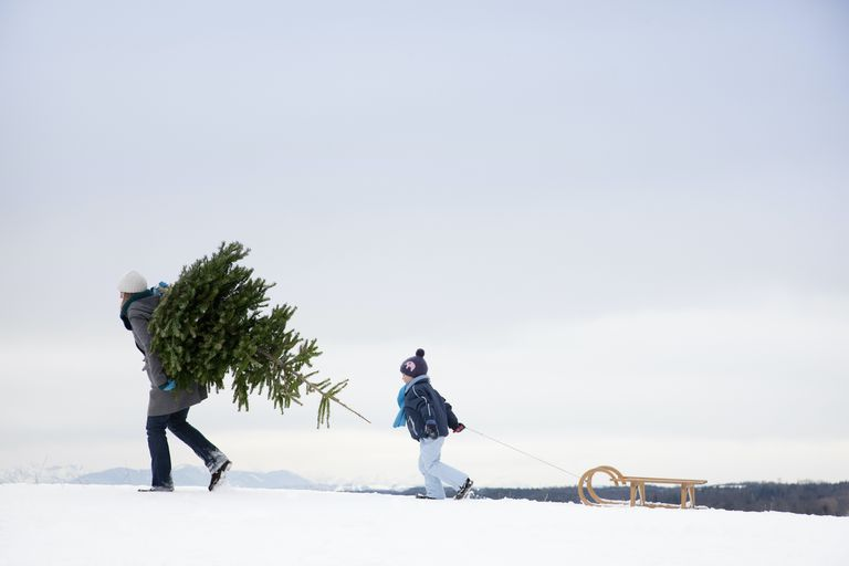 mother carrying Christmas tree with son behind