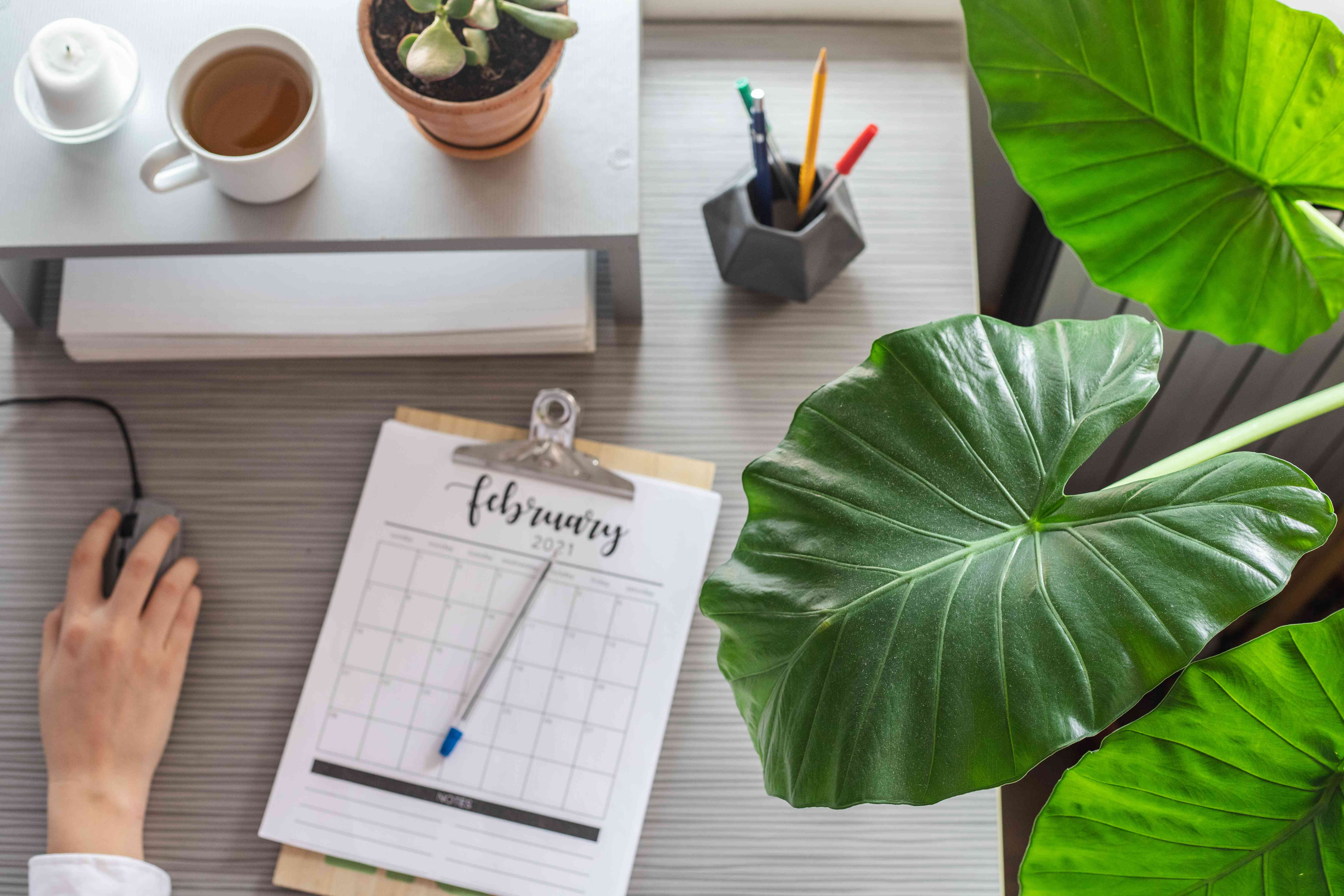 overhead shot of person at work desk while philodendron big leaf plant peeks over