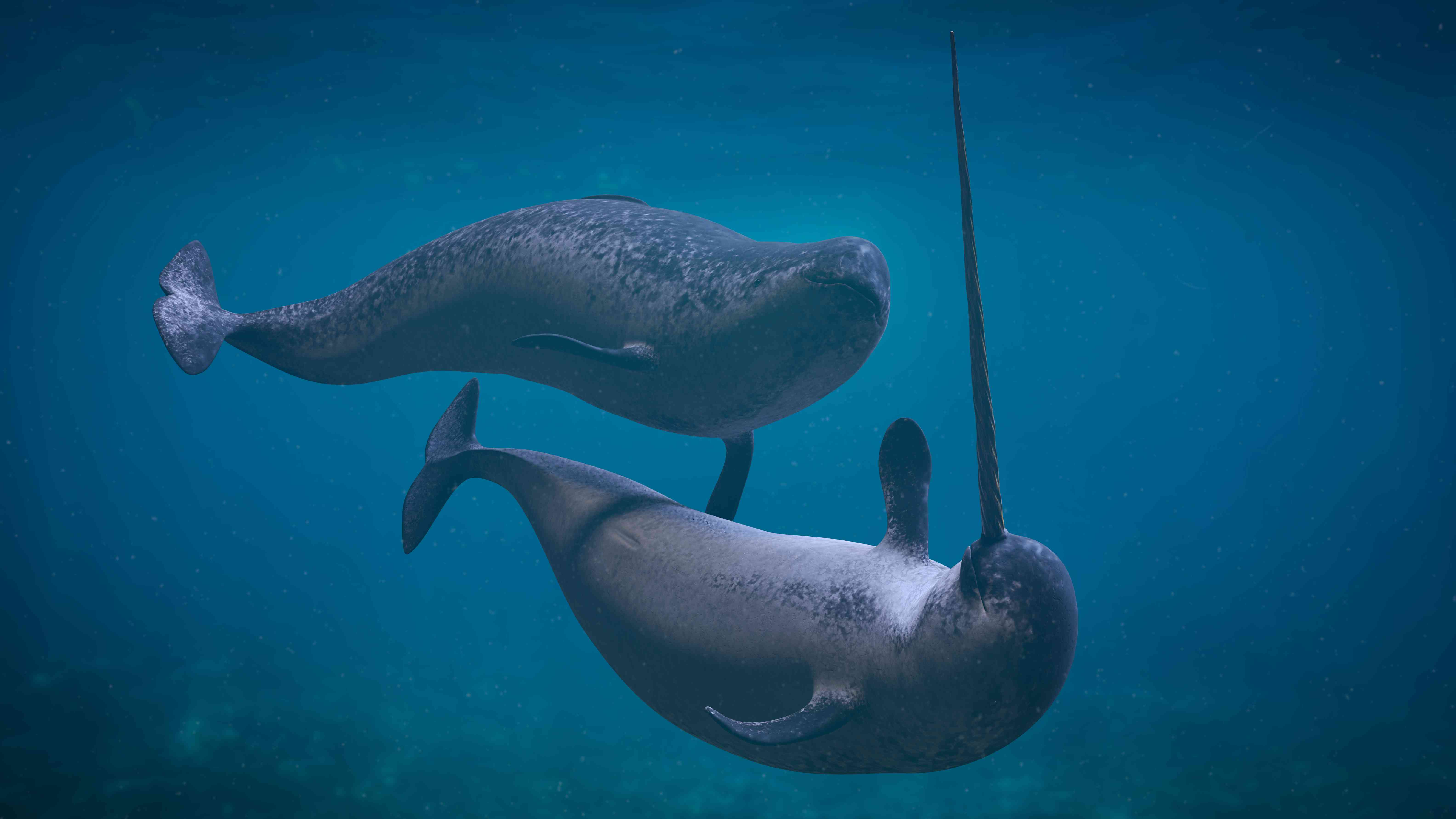 3D rendering of a narwhal couple
