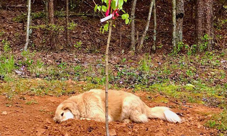 Sanctuary Dog llora a sus amigos animales al quedarse a su lado