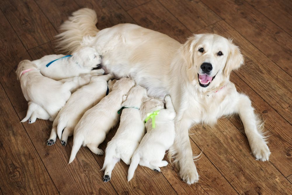 Why Happy Animal Parents Show Off Their Babies