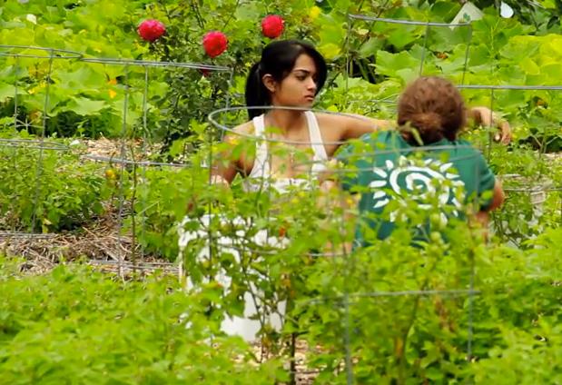 De los bosques alimentarios a la tierra sana. 5 videos increíbles de permacultura.
