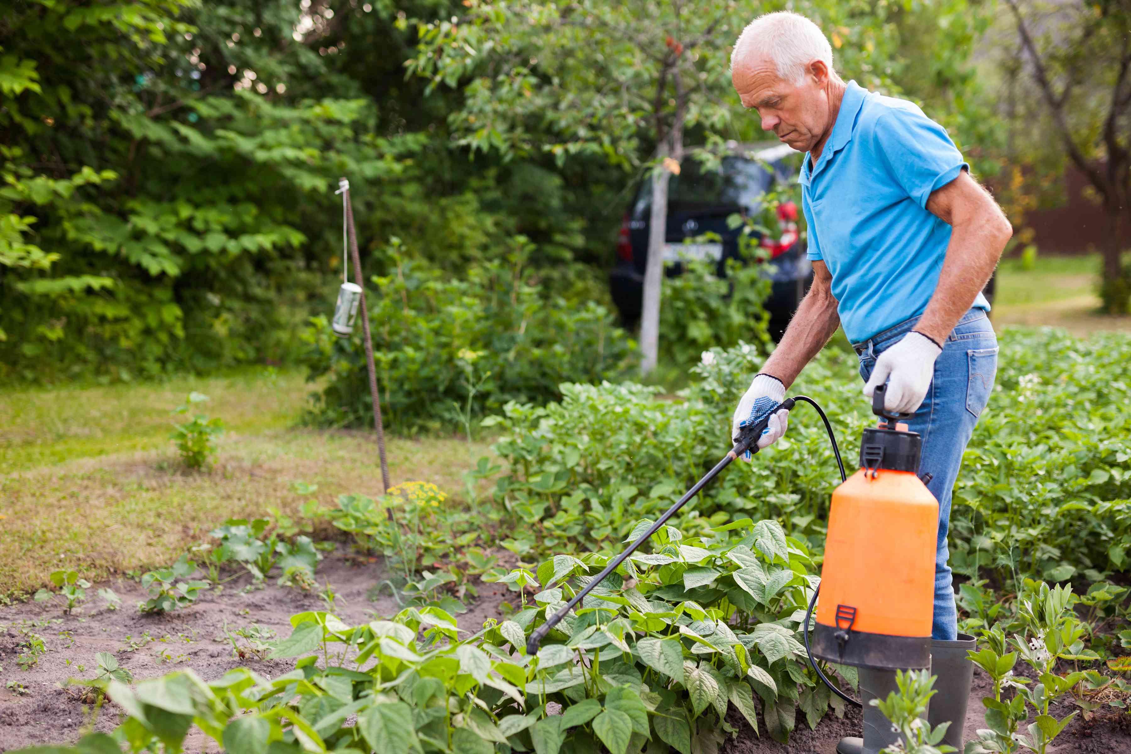 man sprays pesticide in his garden