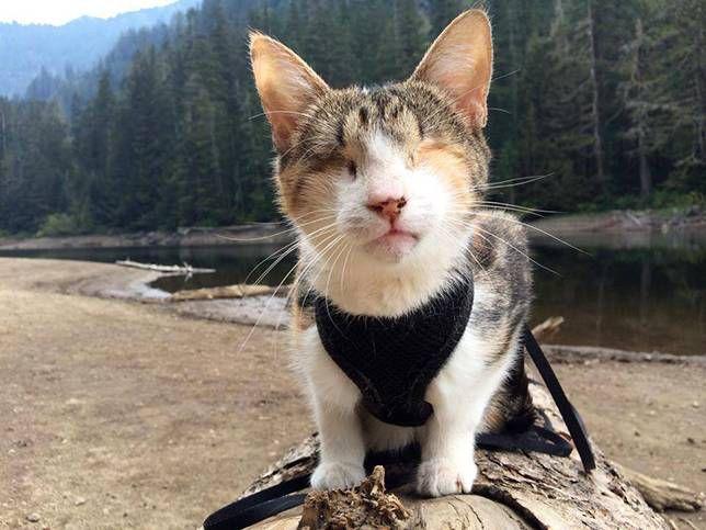 Honey Bee blind cat