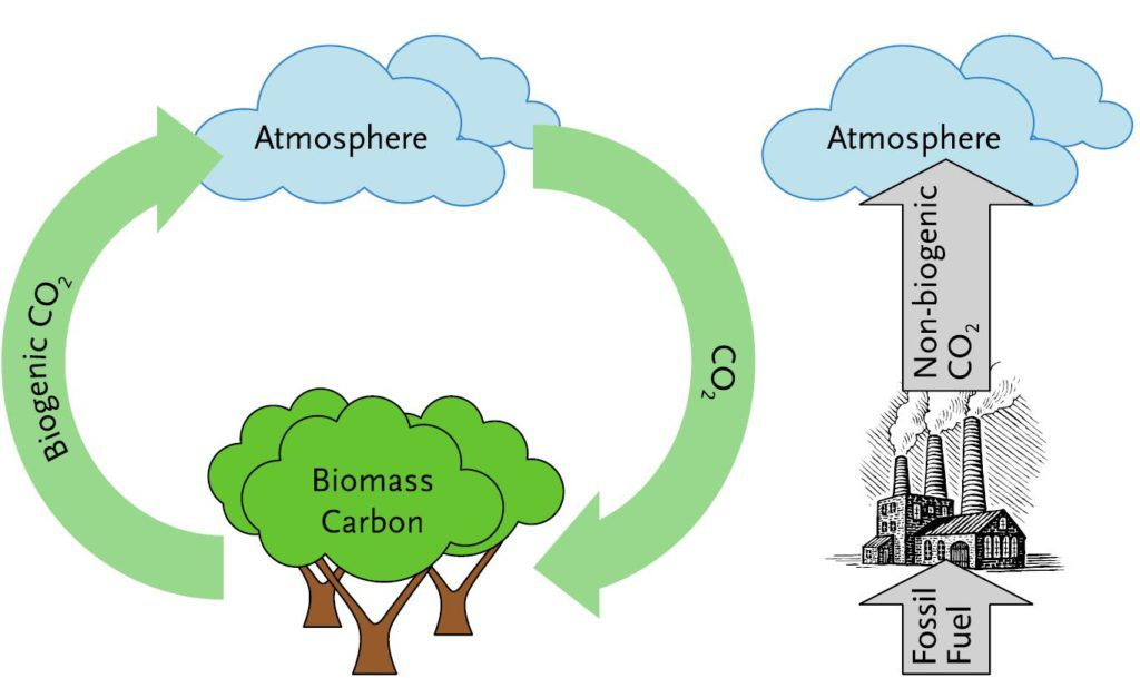 biogenic carbon cycle