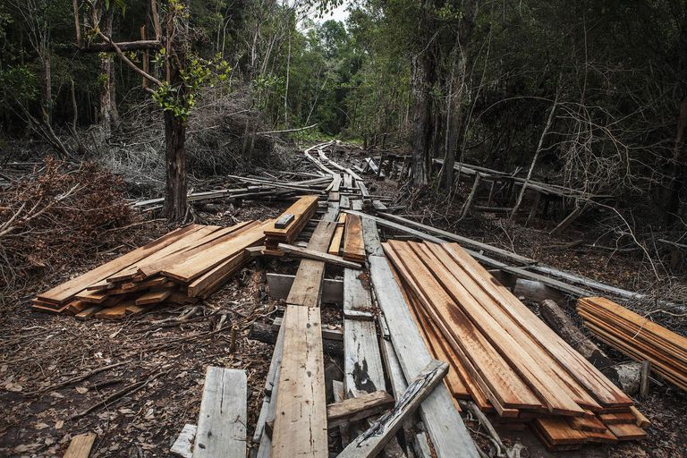 illegally harvested lumber in Indonesia