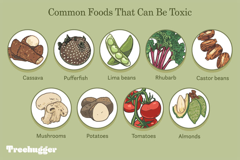 common foods that can be toxic illustration