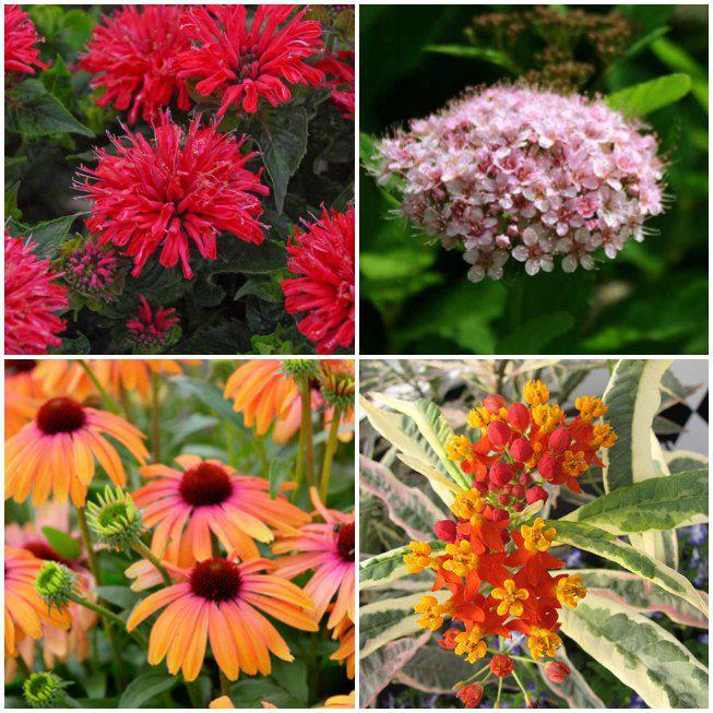 12 nuevas plantas apícolas para plantar este año