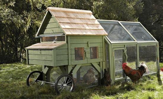 Williams Sonoma chicken coop photo