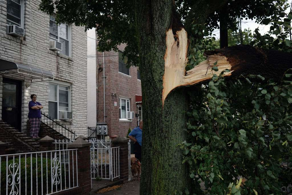 Huge branches of a tree split off trunk in an urban setting.