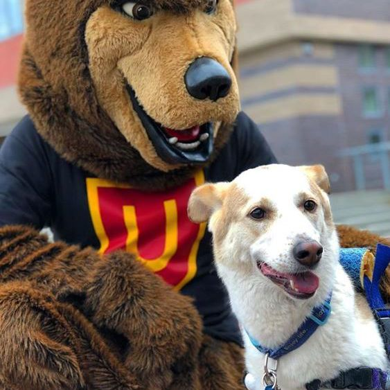 Dog in a wheelchair sitting with bear mascot.