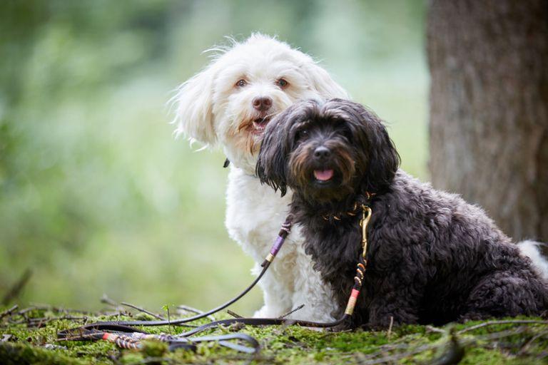 ¿Cuál es la mejor manera de cambiar el nombre de un perro?