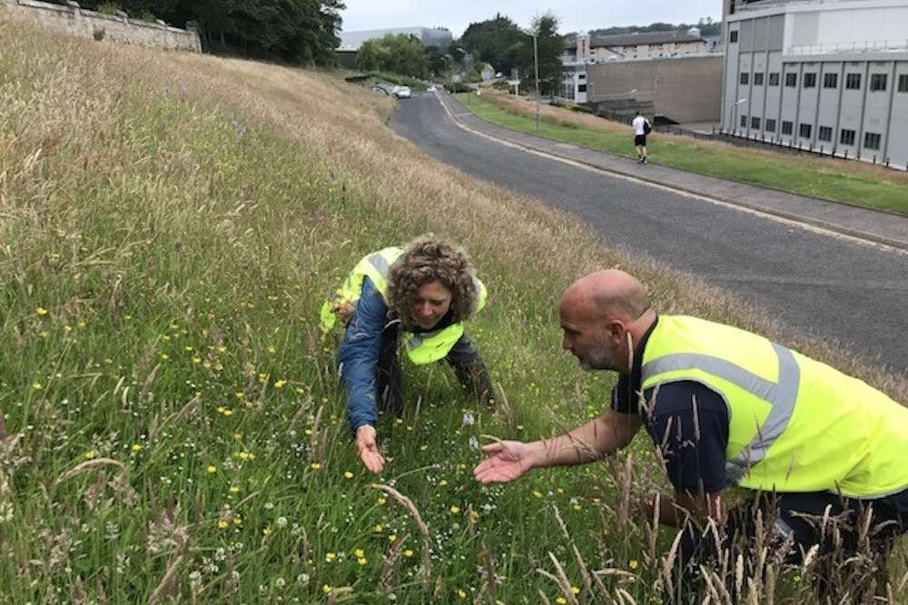 St Andrews University wildflower meadow