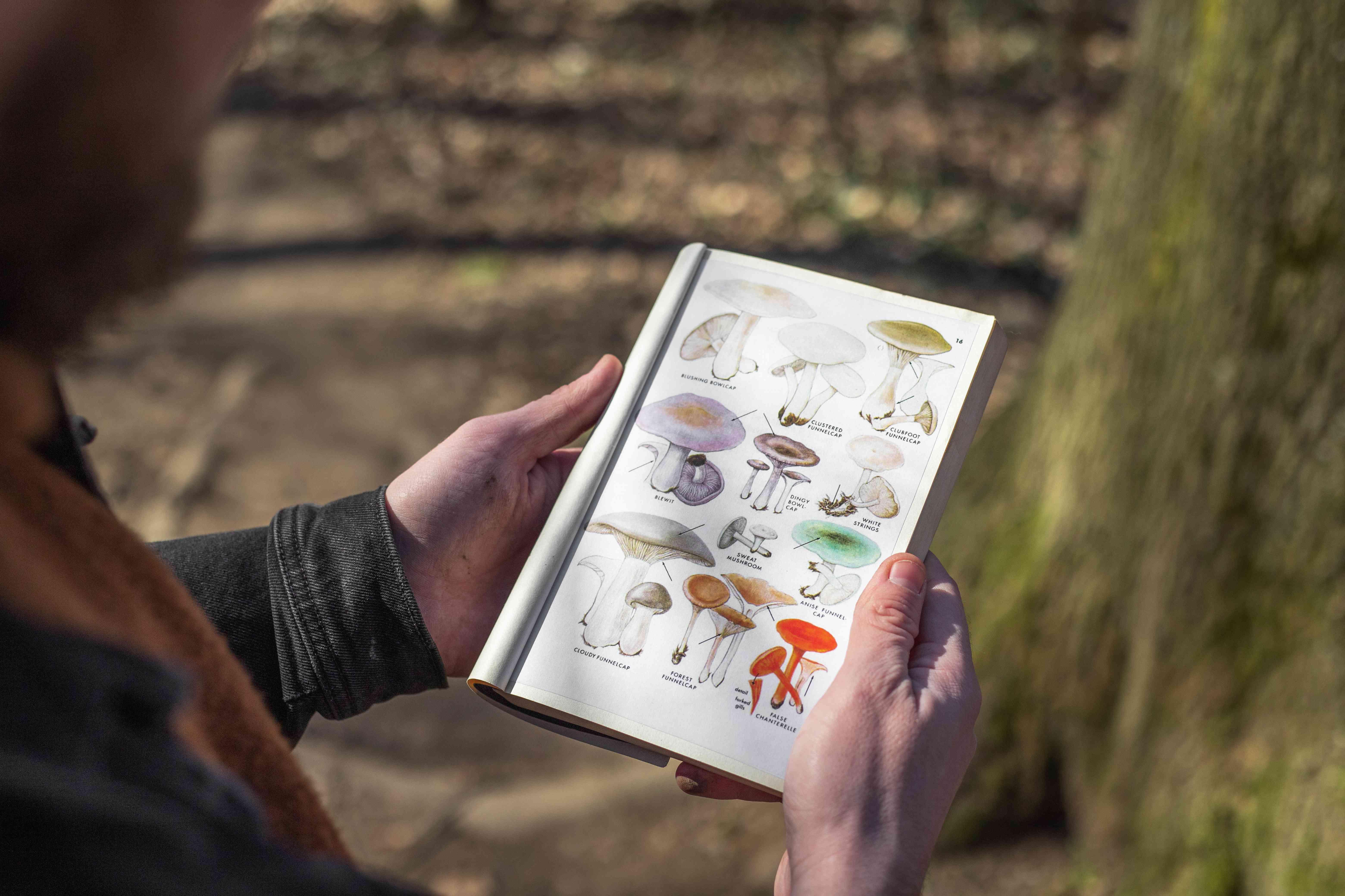 over the shoulder shot of a mushroom identifying book in hands of walker
