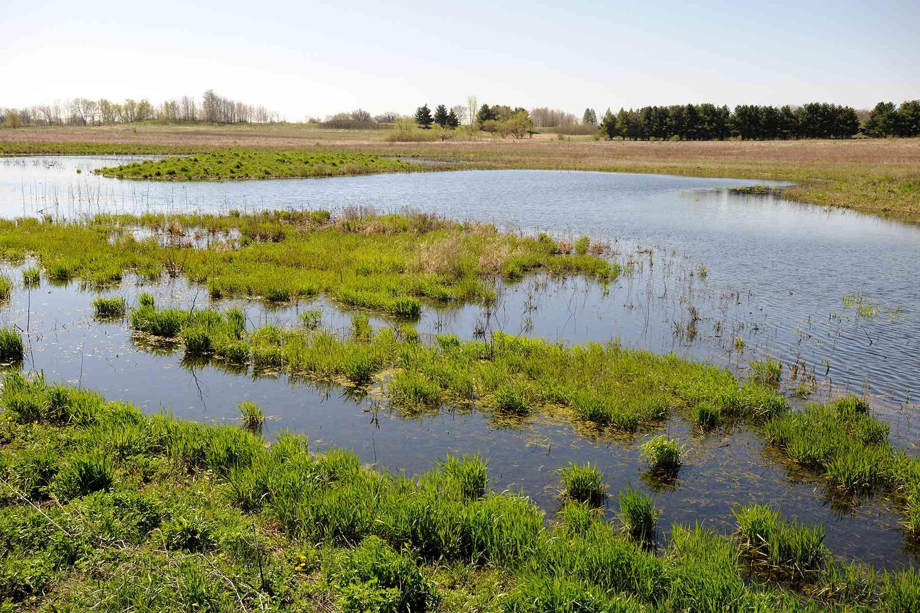 wetland under conservation easement in Iowa