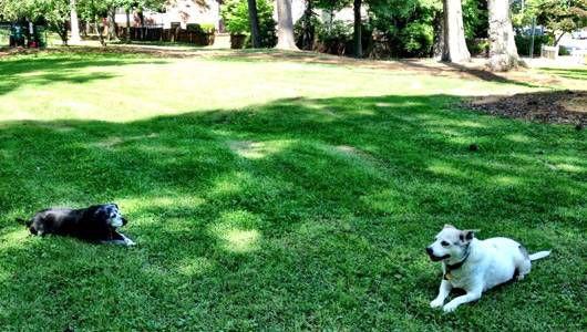 Adair dog park