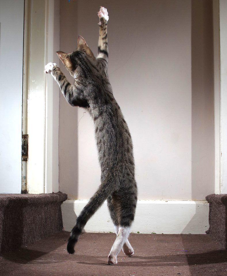 """""""The Dancing Cat"""""""