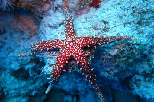 Sea star underwater